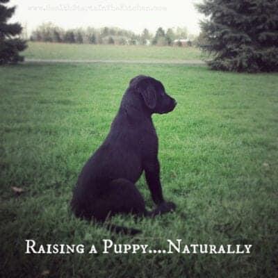 Raising a Puppy… Naturally!
