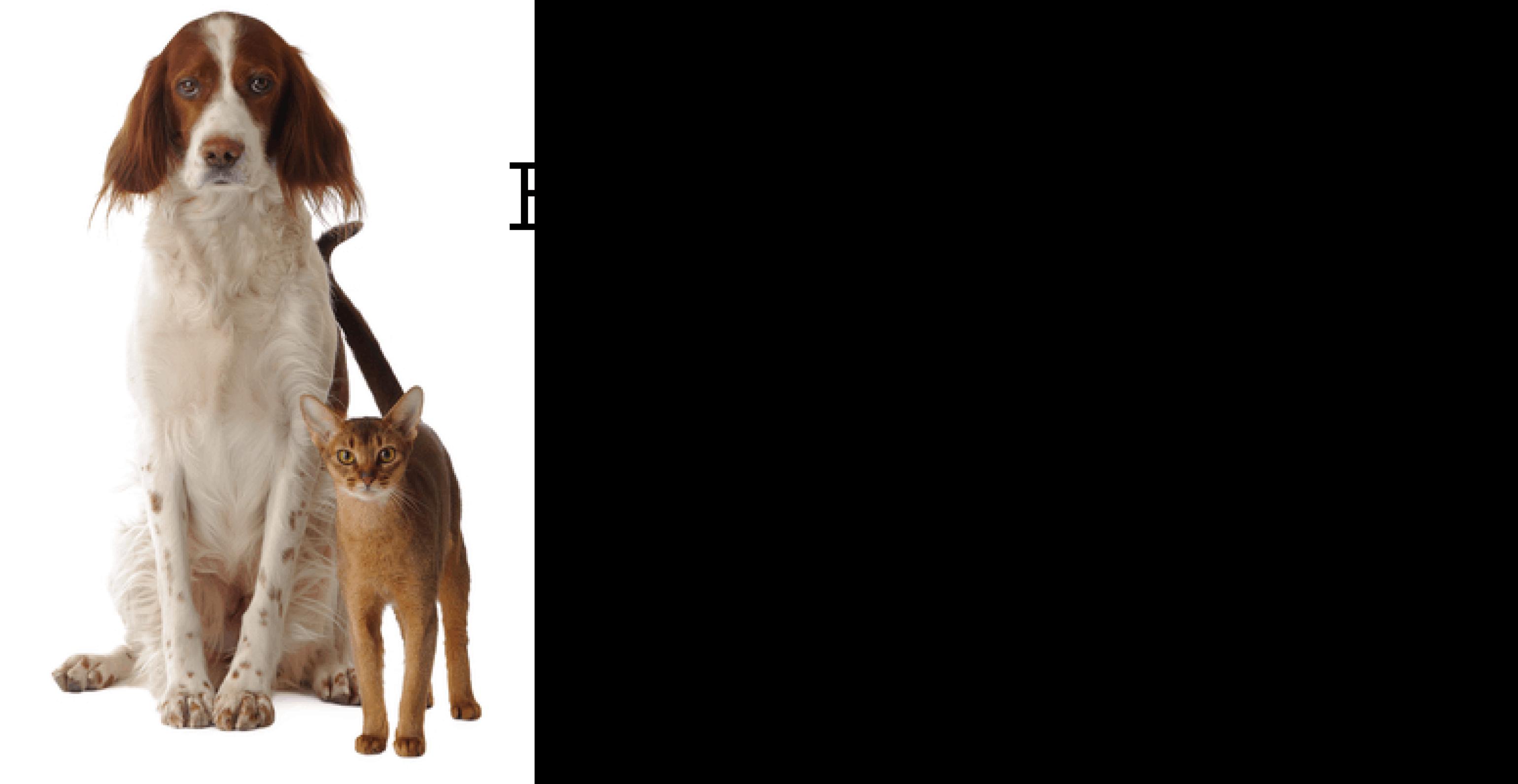 The Grove Can Dog Go