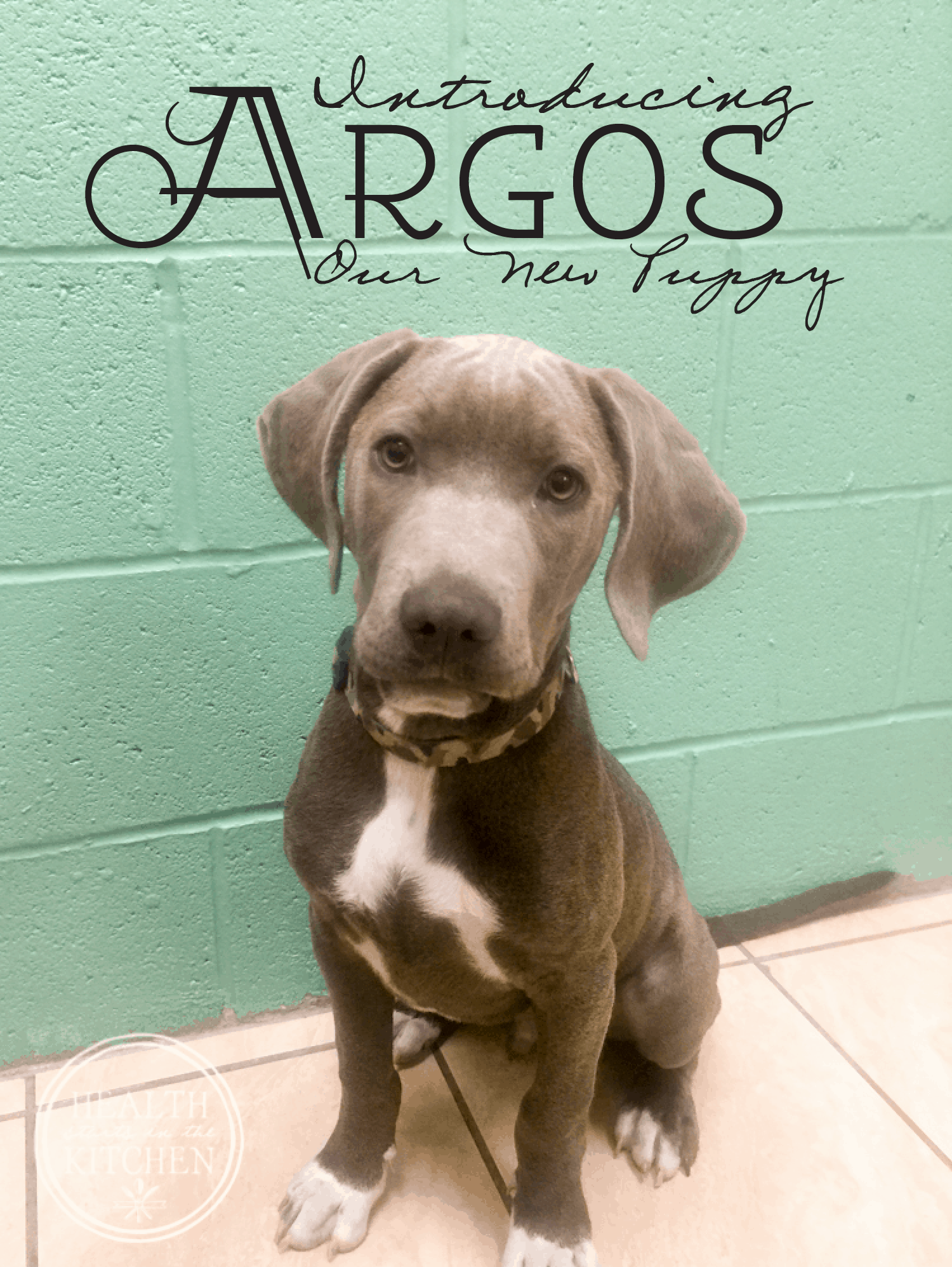Introducing Argos, Our New Puppy!