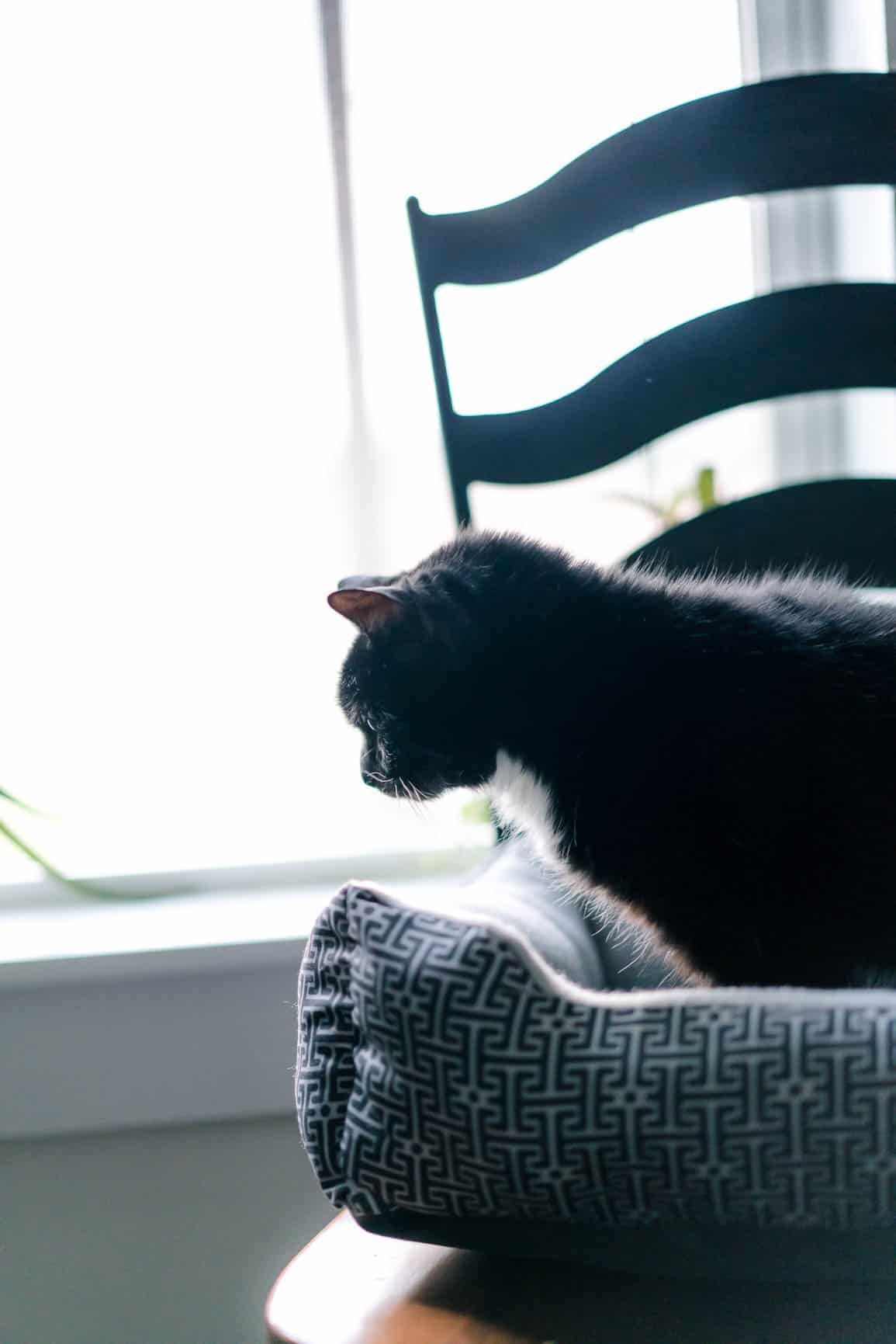 How To Upgrade To A Healthier Litter Box Health Starts